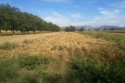TERRENO AGRICOLO di 3500 mq c.a.
